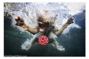 Tots100 Stumble underwater funny dogs