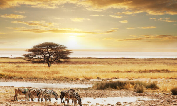 Win a Safari for Two with Audley Travel