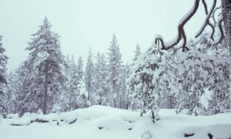 Why Lapland Should be on Everyone's Bucket List